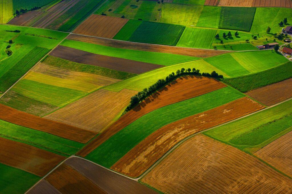 field, farm, green