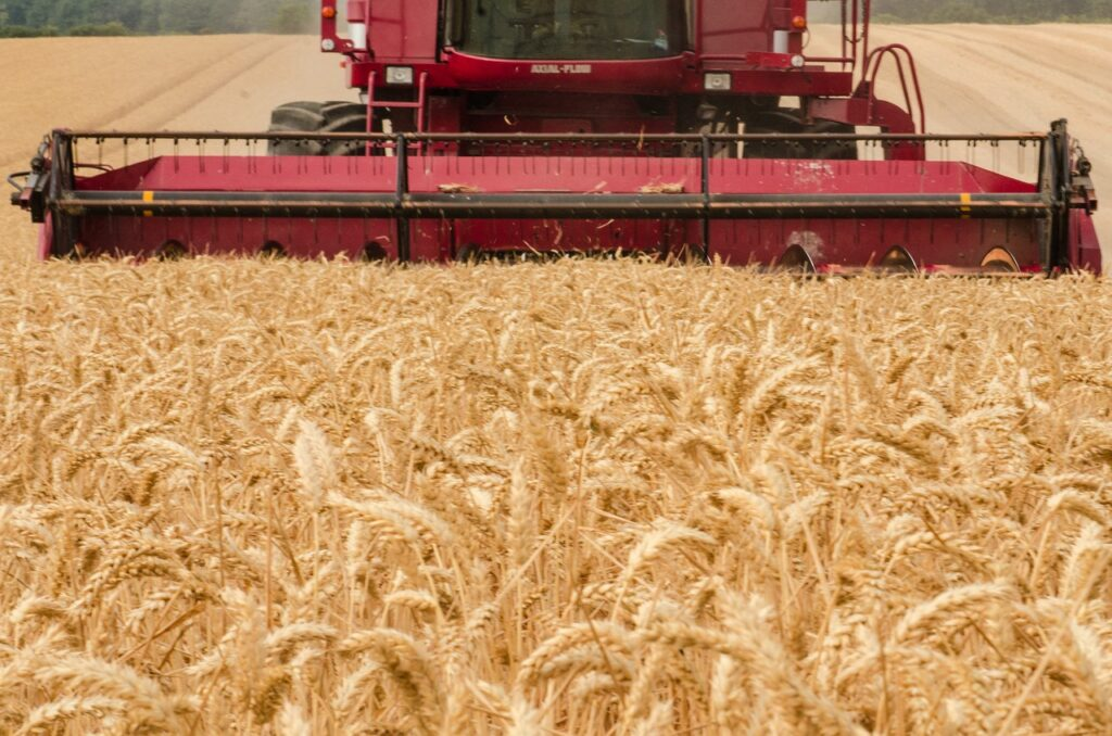 harvester, tractor, wheat